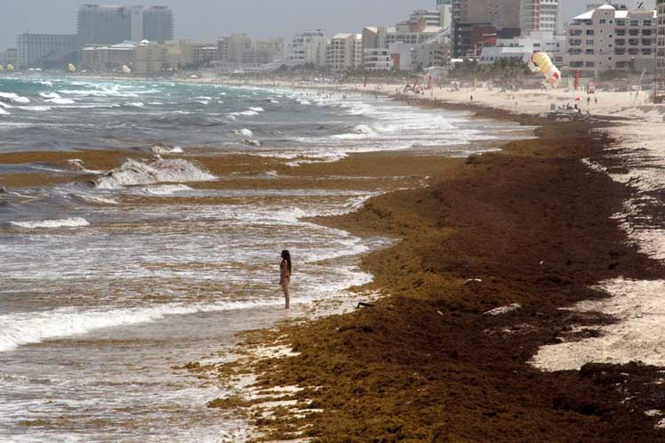 Mexican Caribbean Beaches Affected by Unusual Influx of