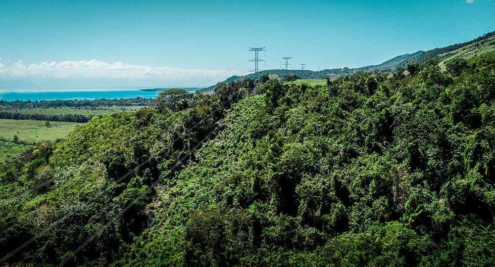 Logran conservar 32.2 hectáreas de bosque durante ejecución del Plan de Expansión de Transporte de Energía